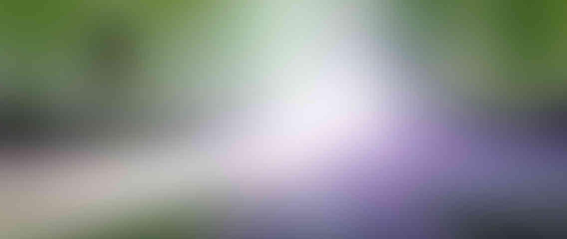 http://charlys-musicshop.com/wp-content/uploads/2013/03/standout_slide_1_v01-1136x480.jpg