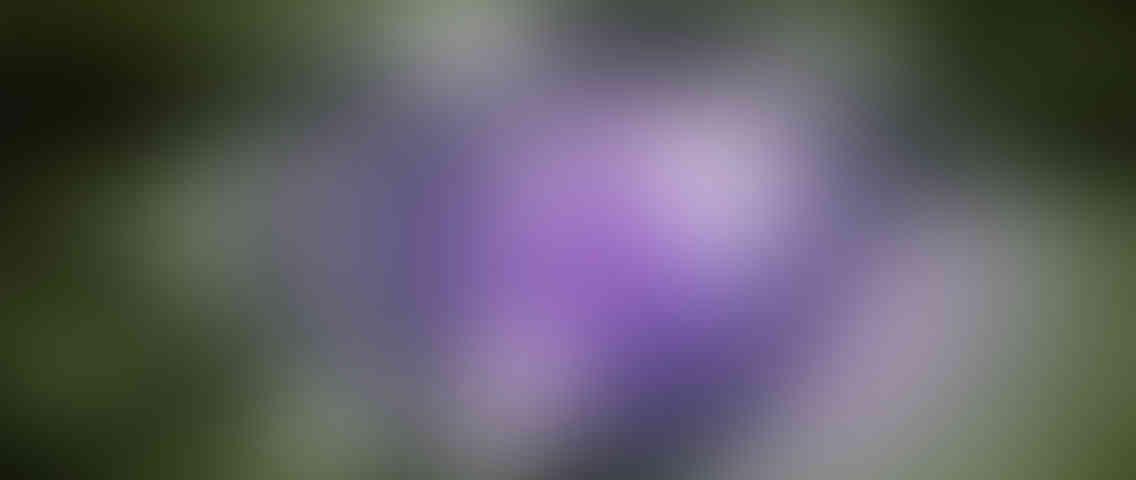http://charlys-musicshop.com/wp-content/uploads/2013/03/standout_slide_3_v01-1136x480.jpg